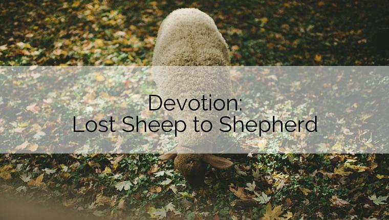 Devotion: Lost Sheep to Shepherd